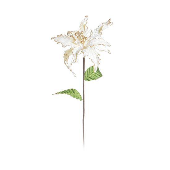 Poinsettia Marfim (Flores Cabo Longo)  - 12 Unidades
